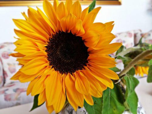 sunflower flower flowers
