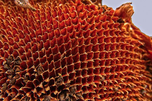 sunflower  flower basket  dry