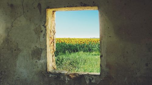 sunflower window grunge