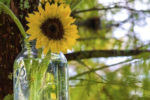 sunflower mason jar ball jar