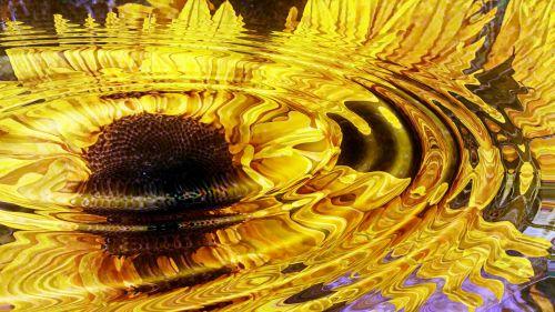 Sunflower Ripples