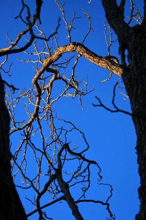 Sunlight On Bare Branch & Blue Sky