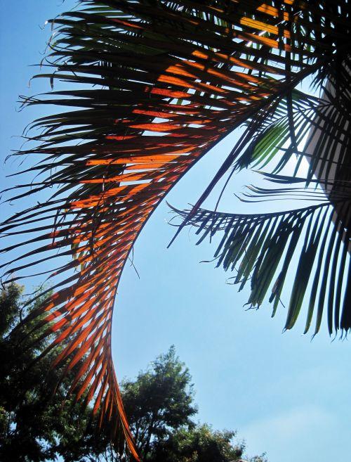 Sunlight On Palm