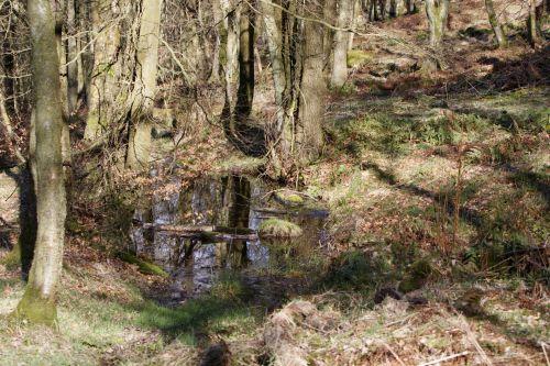 Sunlit Woodland Pool