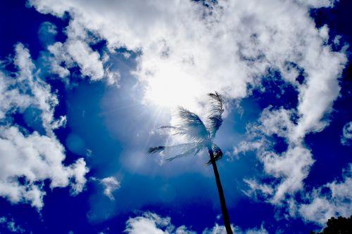 sunny sky skies