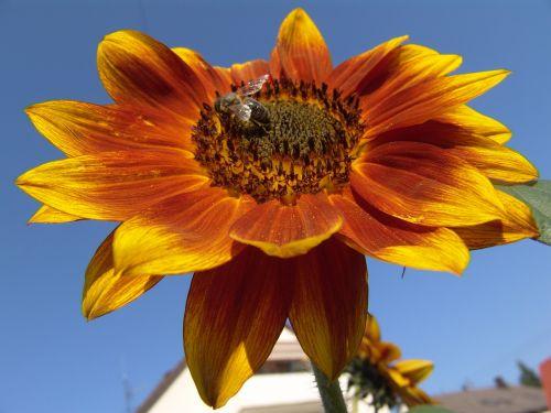 sunny blossom bloom