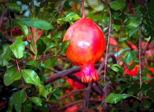 Sunny Pomegranate