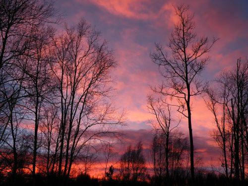 sunrise pink trees