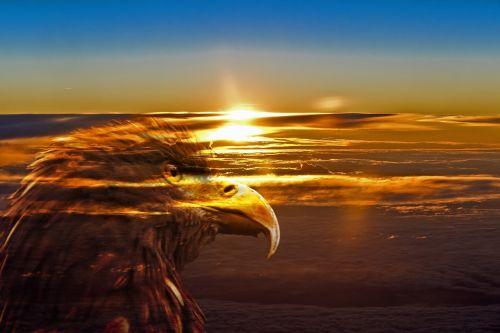 sunrise adler new day