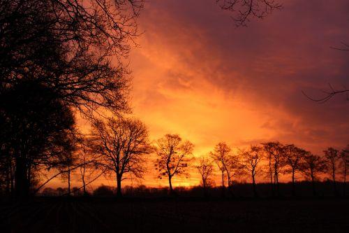 saulėtekis,dangus,medžiai,dangus,morgenstimmung,gamta,aukso dangus,kraštovaizdis,rytas