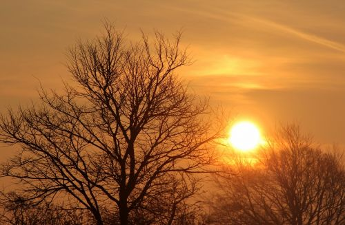 sunrise tree morning