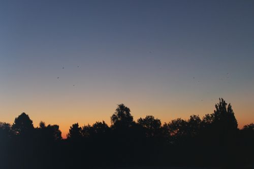 sunrise horizon morgenrot