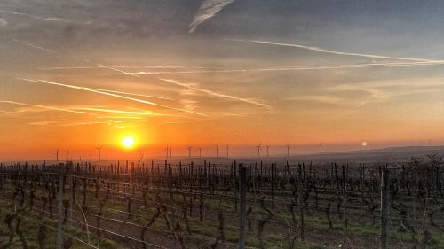 sunrise rheinhessen vineyards