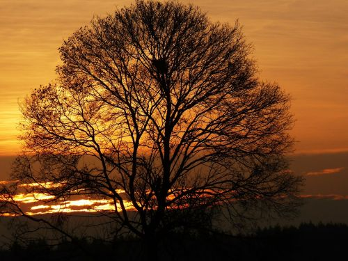 sunrise morgenrot landscape