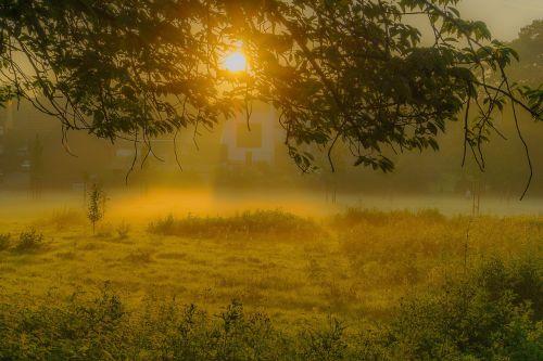 sunrise fog tree