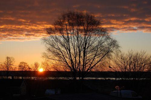 sunrise vårbjörk himmel