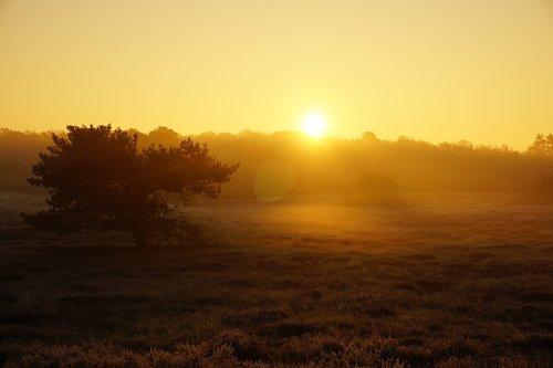sunrise  heide  fog