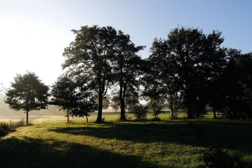 sunrise pasture trees