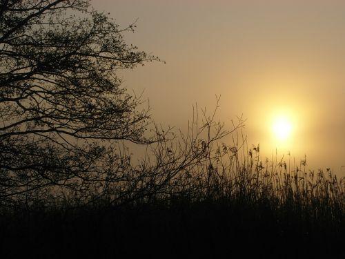 sunrise nature landscapes