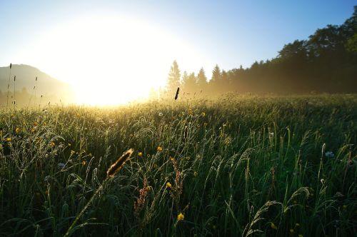 saulėtekis,pieva,saulė,rytas,dangus,miškas,gėlės,kraštovaizdis,gamta,atgal šviesa,morgenstimmung,auksas,atmosfera,ryto šviesa,dangus,atmosfera,nuotaika,šiluma,šviesa,žolės,rasa,saulės šviesa,pavasaris,šviesus,lichtspiel,grožis,spalva,spalvinga,frisch
