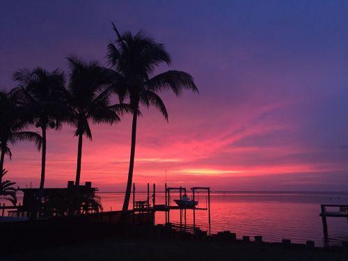 saulėlydis,florida,ruskin,siluetai,delnus,siluetai,rožinis dangus