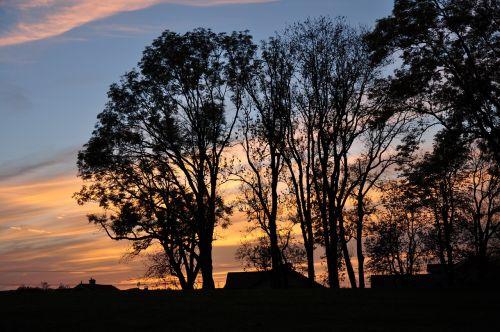 sunset trees twilight