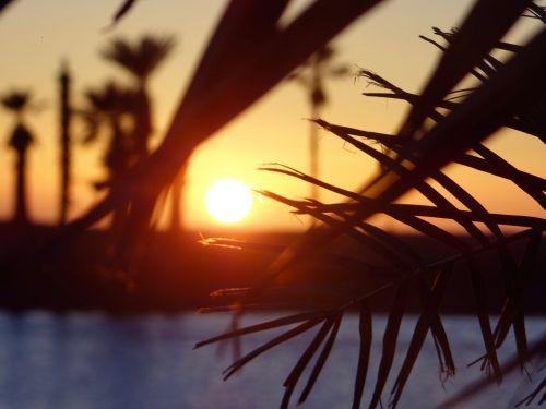 sunset beach palms