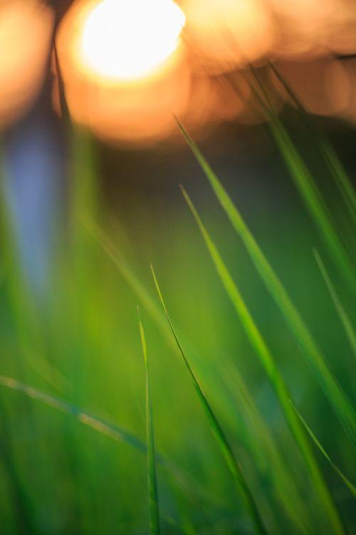 sunset grass twilight