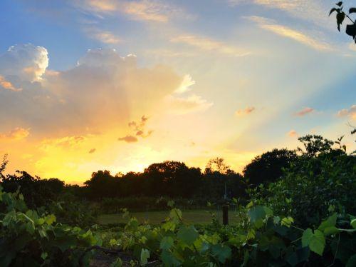 sunset abendstimmung sky