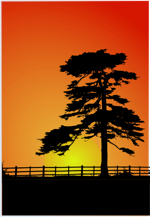 sunset cedar cedar tree