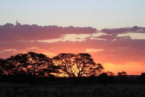 sunset silhouette kalahari