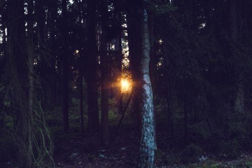 sunset rays light