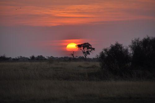 sunset botswana okavango