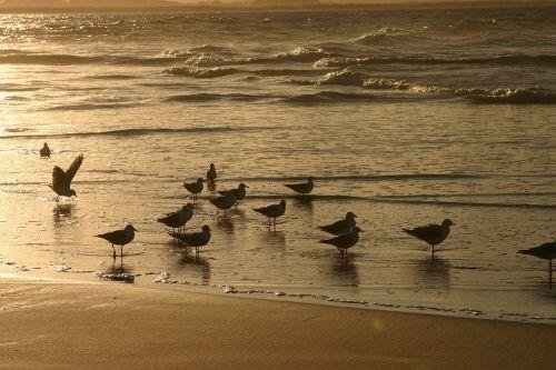 sunset beach surf water