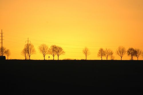 sunset trees silhouettes