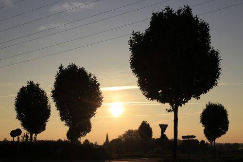 sunset trees back light
