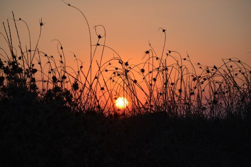sunset halme grass