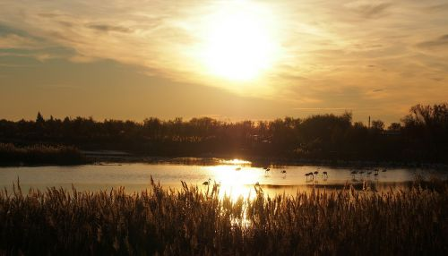 saulėlydis,prieš dieną,gamta,flamandų