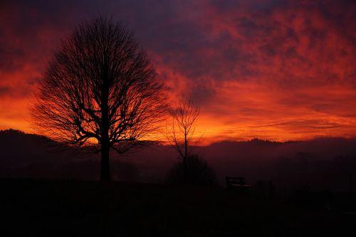 sunset tree aesthetic