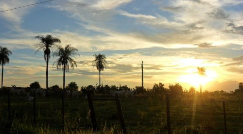 sunset palm trees paraguay