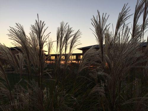 sunset grass midwest