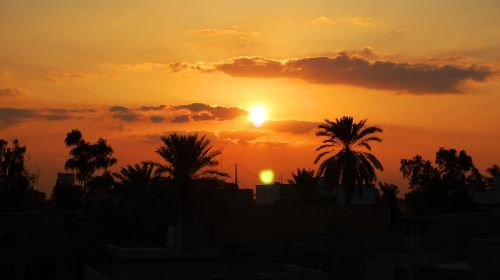 sunset baghdad palm trees