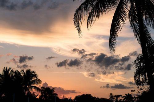 sunset palms clouds