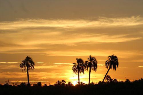 sunset palmar between rivers