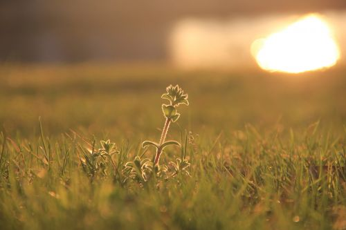 sunset shining grass