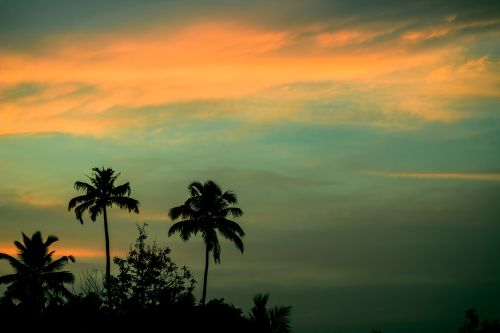 sunset palm trees coconuts