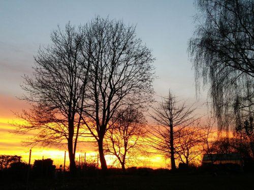 sunset tree abendstimmung