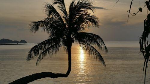sunset silhouette palm