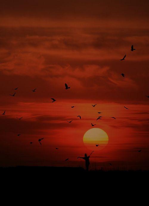 sunset birds girl