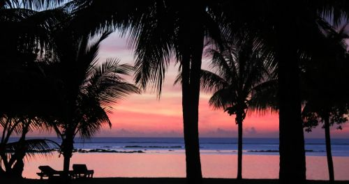 sunset palms tropical